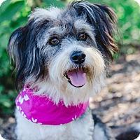 Adopt A Pet :: Bella - Calgary, AB