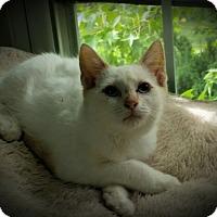 Adopt A Pet :: Seeley - Fairborn, OH