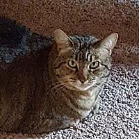 Adopt A Pet :: Skipper - San Juan Capistrano, CA