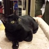 Adopt A Pet :: Larry (Petsmart FH) - Trenton, NJ
