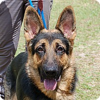 Adopt A Pet :: Jax AD 07-10-17 - Preston, CT