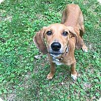Adopt A Pet :: Ella - Harrisville, RI