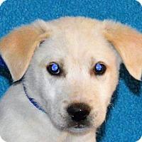 Adopt A Pet :: **ROWDY** meet July 8th! - Mukwonago, WI