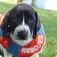 Adopt A Pet :: INSLEY - ADOPTION PENDING! - Pennsville, NJ