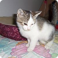 Adopt A Pet :: SCARLET - Medford, WI