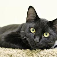 Adopt A Pet :: Ellsworth - Lynchburg, VA