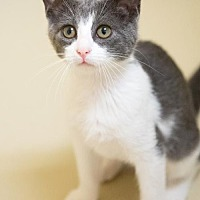 Adopt A Pet :: Wicket and Akemi - St. Paul, MN