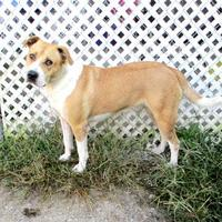 Adopt A Pet :: Sarah - Fayetteville, TN