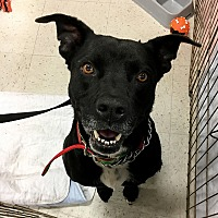 Terrier (Unknown Type, Medium) Mix Dog for adoption in McCormick, South Carolina - Bruiser