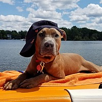 Adopt A Pet :: Riggs - Foster Needed - West Bloomfield, MI
