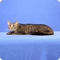 Adopt A Pet :: Noah - Cary, NC