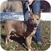 German Shepherd Dog Mix Dog for adoption in Denver, Colorado - Luis