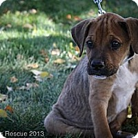 Adopt A Pet :: Jase - Broomfield, CO