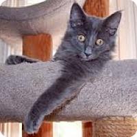 Adopt A Pet :: Marvin - Arlington, VA