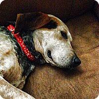 Adopt A Pet :: Sadie - Leesburg, VA