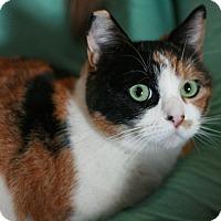 Adopt A Pet :: Spirit - Canoga Park, CA