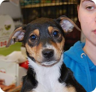 Terrier (Unknown Type, Medium) Mix Puppy for adoption in Brooklyn, New York - Tipper