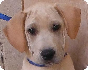 Retriever (Unknown Type)/Hound (Unknown Type) Mix Puppy for adoption in Cedartown, Georgia - 27953165