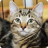 Adopt A Pet :: Stuart - Irvine, CA