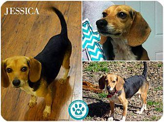 Beagle Mix Dog for adoption in Kimberton, Pennsylvania - Jesica