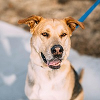 Adopt A Pet :: Diesel - Manhattan, KS