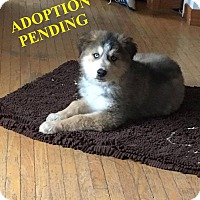 Adopt A Pet :: AURORA - Winnipeg, MB