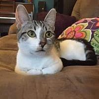 Adopt A Pet :: Quinn - LaGrange Park, IL