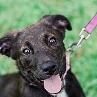 Adopt A Pet :: Peach $250 - Seneca, SC