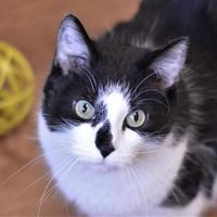 Adopt A Pet :: Tanya - Dodgeville, WI