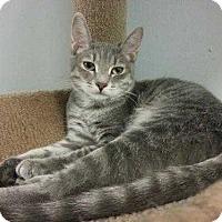 Adopt A Pet :: Penny - Margate, FL