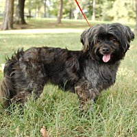 Adopt A Pet :: COCOA PUFF - Allentown, PA