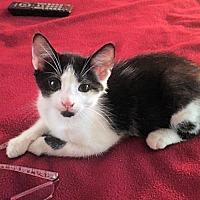 Adopt A Pet :: Jack - Nashua, NH