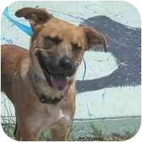 German Shepherd Dog Mix Dog for adoption in Denver, Colorado - Sally