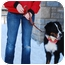 Photo 4 - Bernese Mountain Dog Dog for adoption in Mount Gilead, Ohio - Jacob