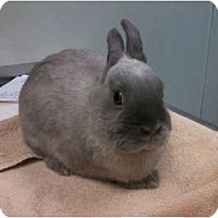 Adopt A Pet :: Thor - North Gower, ON