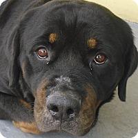 Adopt A Pet :: May - Seffner, FL