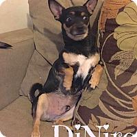 Adopt A Pet :: DeNiro (Courtesy Listing) - Scottsdale, AZ