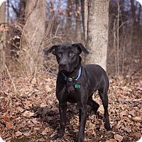Adopt A Pet :: Ryan - Lewisville, IN