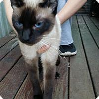 Adopt A Pet :: Pearl - Modesto, CA