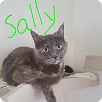 Adopt A Pet :: Sally - Salem, OH