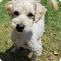 Adopt A Pet :: Jeremy - Los Angeles, CA