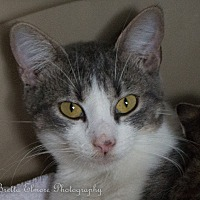 Adopt A Pet :: Hope - Daleville, AL