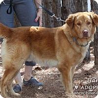 Adopt A Pet :: Harry & David - Minneola, FL