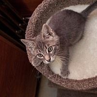 Adopt A Pet :: Taz - Statesville, NC