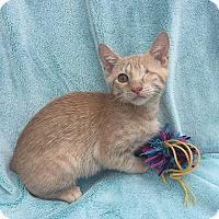 Adopt A Pet :: Alpha - Tampa, FL