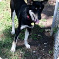 Adopt A Pet :: Kya - Rexford, NY