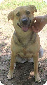 Shepherd (Unknown Type) Mix Dog for adoption in Mocksville, North Carolina - Leia