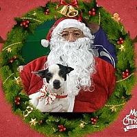 Adopt A Pet :: Omni - San Bernardino, CA