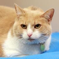 Adopt A Pet :: Yang - Columbus, OH
