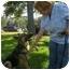 Photo 2 - German Shepherd Dog Dog for adoption in Green Cove Springs, Florida - Cheyenne